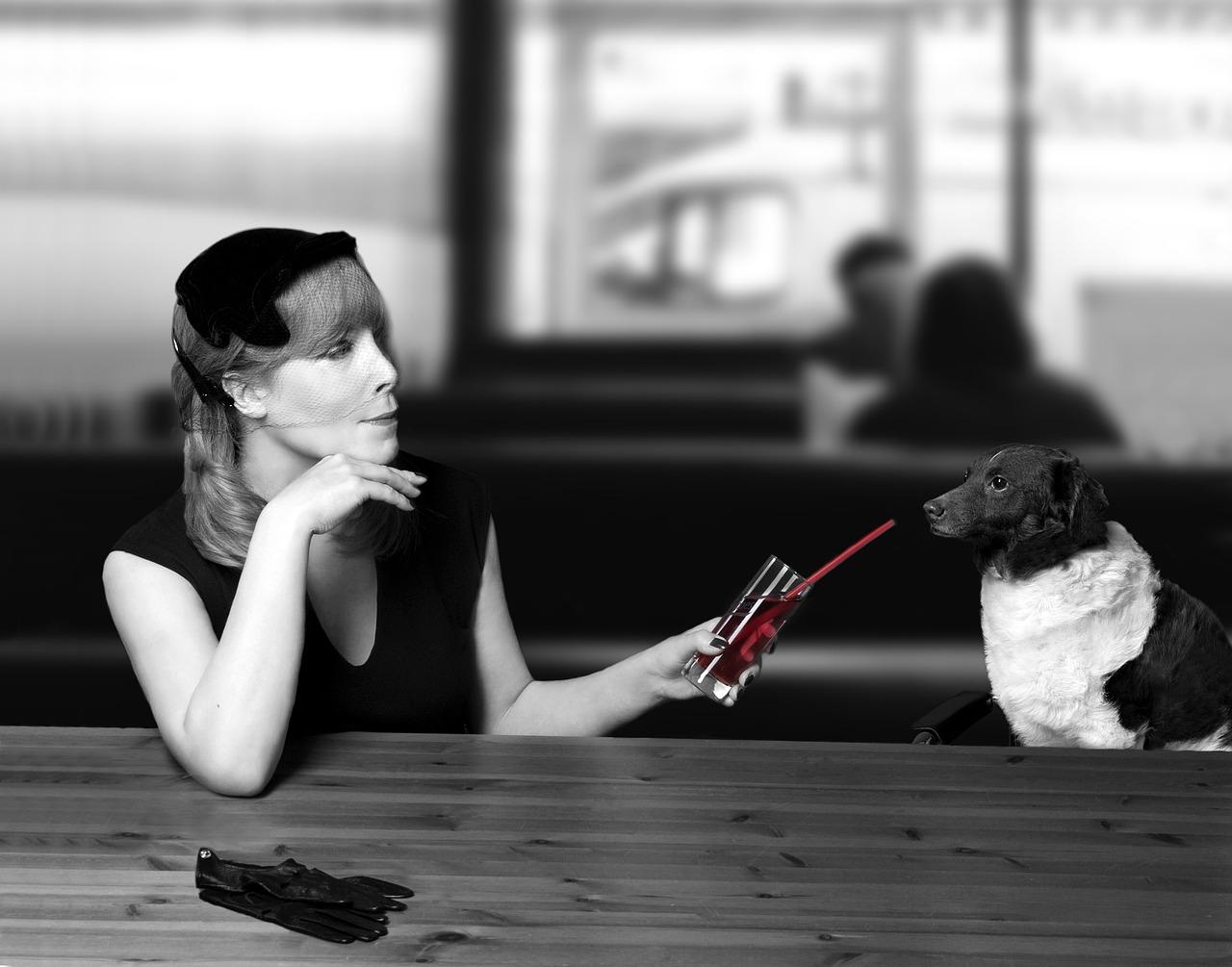 mejor amigo perro pet dog relatos cruce de caminos beitavg