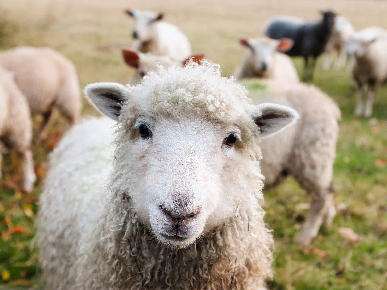 reto ray bradbury, rebelión en la granja, relatos cortos, beitavg